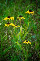 arrowhead lake. july 2016 (timp37) Tags: flowers illinois palos heights arrowhead lake july 2016