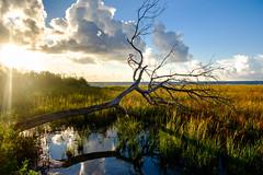 Fallen Tree (Daniel Ray) Tags: animal bird galveston seabrook bay gully park pine sunrise