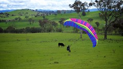 Anna bringing down the wing (overflow50) Tags: paragliding paraglider canberra spring springhill sky clouds