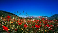 Castelluccio di Norcia (My Magical Slow Trip) Tags: castelluccio