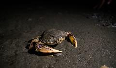 Mr Crab (the_mitrov) Tags: crab beach sand sea