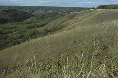 Silver Valley ER (Alberta Parks) Tags: hills plains grasslands alberta canada prairie trees grass landscape silvervalley ecologicalreserve protectedarea hill grassland