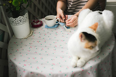Weekend's Afternoon (Picocoon) Tags: weekend home cat pet handmade table balcony cloudy overcast coffee calm family life living