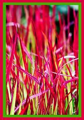 AH62_8130 (der_andyrandy) Tags: gras outdoor rot rahmen canoneos7d
