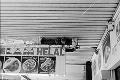 Platz fr 2 / room for 2 (n0core) Tags: room platz taube analog helal dsseldorf bw bahnhof dner canon food pigeon dach 35mm 135 f1 film filmfilmforever gebude grain korn lomography lomo n74 n74plus orwo ostfilm panchromatic urban stadt city essen werbung commercial advertising