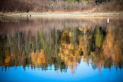 Reflections on Gander Lake (Sandra Y Moss) Tags: gander ganderlake colours autumn reflections