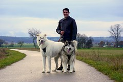 A Beautiful Day in the Neighborhood (grisswife) Tags: autumn pack pet dog malamute