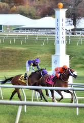 2016-11-06 (44)-1 r3 Horacio Karamanos on #8 Marabea for the win at Laurel Park (JLeeFleenor) Tags: photos photography md marylandhorseracing racing track laurelpark horaciokaramanos jockey   jinete  dokej jocheu  jquei okej kilparatsastaja rennreiter fantino    jokey ngi horses thoroughbreds equine equestrian cheval cavalo cavallo cavall caballo pferd paard perd hevonen hest hestur cal kon konj beygir capall ceffyl cuddy yarraman faras alogo soos kuda uma pfeerd koin    hst     ko  winner
