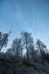 """Cold nights under Andromeda"" (Ronny Årbekk - http://arcticphotography.no) Tags: specland flickrsbest arctic norway norge nordnorge norwegen ronnyårbekk ronnyårbekkphotography harstad troms northernnorway landscape norwegian norsk norwegianphotographer fotograf visipix nikon iamnikon nikonphotography nikonafsnikkor1424mmf28ged"