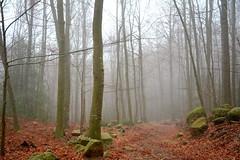 Tardor i boira al Montseny, Valls Oriental (Angela Llop) Tags: catalonia spain montseny vallsoriental autumn fog barcelona