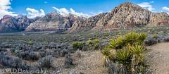 048-RRC160201_46935-Pano (LDELD) Tags: lasvegas nevada unitedstates us desert rugged dry rocks sand formations redrocknationalconservationarea mountains scenic landsscape cactus yucca
