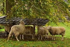 20161120-122101-Reisfotografie-13 (ericgbg) Tags: zuiderzeemuseum pietendorp enkhuizen