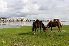 Doñana (Jantbrown) Tags: doñana parque natural ecología ecologismo greenpeace protesta el rocío manifestación campo verde naturaleza españa ecologistas medio ambiente