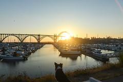 Newport Marina Sunset (Justin Knott) Tags: sunset beach dogs nikon collie border newport pistol sailboats rokinon