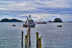 Seining for Pink Salmon (Tatchum) Tags: pink alaska fishing salmon sound sitka seining humpies
