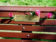 Roses for Jeremy (photo by Jean Upton)