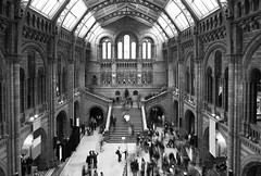 "Natural History Museum • <a style=""font-size:0.8em;"" href=""http://www.flickr.com/photos/45090765@N05/21900437191/"" target=""_blank"">View on Flickr</a>"