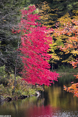 Fall Flair (BBarber126) Tags: fall nature ma pond colorful bright foliage serene spencer