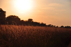 the end of the day at the beginning of autumn (christiaan_25) Tags: autumn light sky sun sunlight fall 120 nature grass landscape outdoors gold golden afternoon outdoor perspective explore late prairie tallgrass mortonarboretum schulenbergprairie oct102015