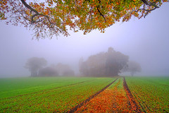 Foggy Kings Moss (JodBart) Tags: trees light sky orange colour green fog fields billinge kingsmoss