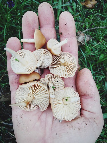 These are going to be a tasty soup.....which is already finished!😉 Mushrooms Fungus Hand Handful Food Raw Fresh IPhoneography Nature Handpicked www.pandevonium.com
