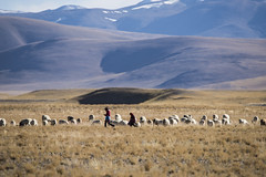 CYM_5343 (nature1970613) Tags: china tibet