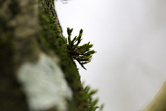 (JONBRNS Photography) Tags: uk england macro green nature forest moss woods bokeh explore british bentley natureandnothingelse