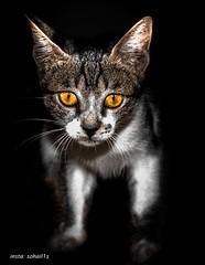 (sohail9360) Tags: cats cat nikon byme         nikond750
