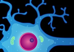 Neuron with dendrites and nucleus (National Institutes of Health (NIH)) Tags: neuron nih nucleus neurons nimh dendrites nationalinstitutesofhealth nationalinstituteofmentalhealth nihimagegallery