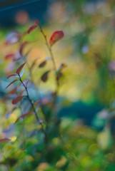 DSC_0321 (criscrot) Tags: nancy lorraine d200 parcsaintemarie bokeh 50mm18 automne autumn buisson