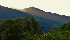 Sunbeam Through the Arrochar Alps (brightondj - getting the most from a cheap compact) Tags: fourthwalk inversnaid trossachs scotland arrocharalps rspb sun sunbeam trees treetops summer2016 holiday summerholiday uk britain ukholiday