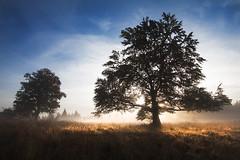Bkk-fennsk, Nagy-mez (A piece of nature.) Tags: landscape tree fog kd pra tjkp hajnal