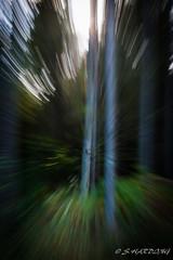 Autumn Zoom (Sean.2009) Tags: nikon d7100 autumn tree zoom