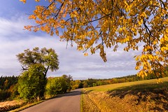 Straight road and yellow leaves of the tree (tomaskriz1) Tags: autumn leave leaves yellow orange czech moravian trees tree season scene rural outdoors nature natural landscape green grass forest colorful beauty beautiful wonderful road blue sky
