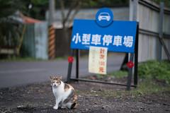 (iam543) Tags: sonya7rii sonyalpha7rii sonyilce7rm2 taiwan newtaipeicity houtongcatvillage cat