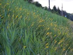 45 degree (michaelmueller410) Tags: grass gras flowers dam green yellow harz osterode bahn bahndamm railway embankment