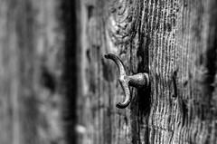 Puerta Taurina   ///   Bull Door (Walimai.photo) Tags: black white blanco negro byn bw branco preto blanc noir door puerta madera wood metal nikon d7000 helios 44m4 58mm
