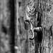 Puerta Taurina   ///   Bull Door