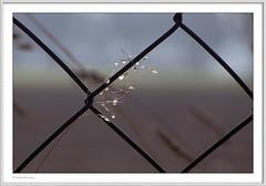 IMGP2788-Rahmen-kl-kl (fredericfromage) Tags: tau tautropfen gras herbst wassertropfen