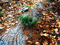 Autumn Art 2 (Sally G Drew) Tags: calabogieontario naturesbeauty waterreflections