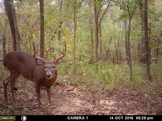 Kentucky Whitetail Hunt 28