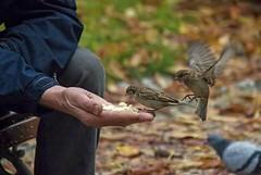 LA ESPERA (Susana M.L.) Tags: pjaro bird parque ave mano