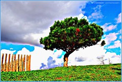 ( C ) Lone Tree (aRtphotojart) Tags: arbol tree cielo nubes nature