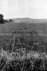 (salparadise666) Tags: moskva 2 industar 23 110mm fp4 caffenol rs mokba nils volkmer bw black white monochrome landscape germany hannover region calenberger land vintage camera
