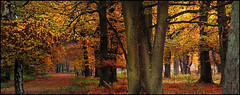 Yellow forest (na_photographs) Tags: trees woods fall autumn herbst laub goldeneroktober