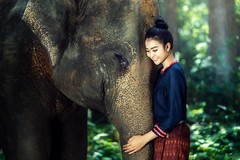 Elephant and girl (santifoto9) Tags: laos man thai tree thailand tusker mammal travel walking ivory myanmar tusk people poor tall area girl forest local face woman rural tourism child wild mahout large vietnam talk safari wildlife national ears elephant indonesia aec smile lifestyle malaysia drive trunk daytime nature environment cambodia herd asian happy animal rustic