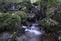 Sedas en el ro Corroriu-Quiros (mercenario.one) Tags: corroriu molino naturaleza otoo raw seda sedao