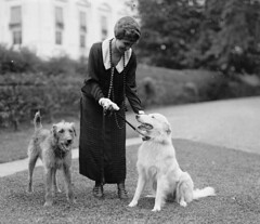 #Grace Coolidge with Laddie Buck (left) and Rob Roy (right), September 26, 1924 [781674] #history #retro #vintage #dh #HistoryPorn http://ift.tt/2gjsKnZ (Histolines) Tags: histolines history timeline retro vinatage grace coolidge with laddie buck left rob roy right september 26 1924 781674 vintage dh historyporn httpifttt2gjsknz