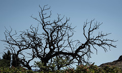 The Tree in Nightmares (maytag97) Tags: maytag97 tamron 150600 150 600 deadtree scary ominous foreboding threatening