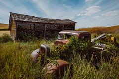 Reclamation (Pedalhead'71) Tags: stjohn washington abandoned truck barn palouse